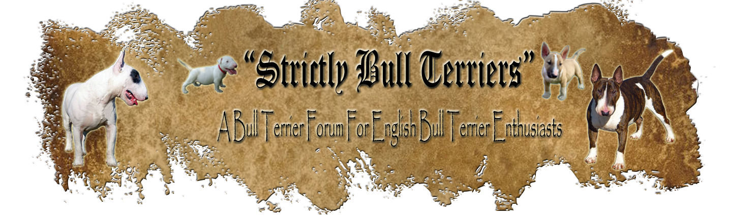 Strictly Bull Terriers
